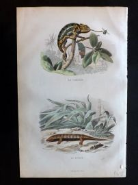 Lacepede & Travies 1881 Hand Col Print. Chameleon Lizard, Skink